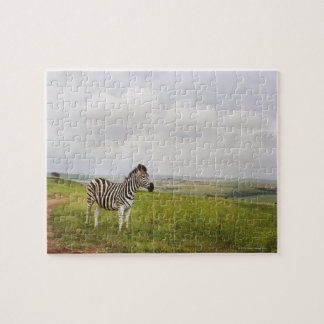 Zebra in the countryside, South Africa Puzzles