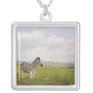 Zebra in the countryside, South Africa Silver Plated Necklace