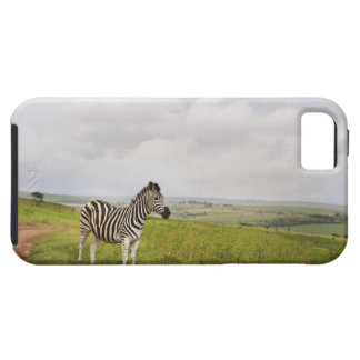 Zebra in the countryside, South Africa Tough iPhone 5 Case