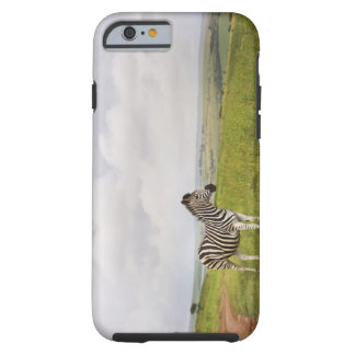 Zebra in the countryside, South Africa Tough iPhone 6 Case