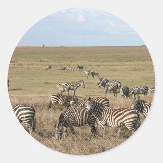 Zebra in the Serengeti in Tanzania Round Sticker