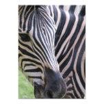 Zebra Invitation