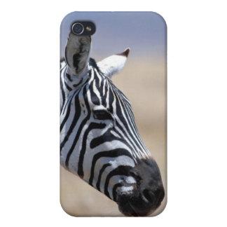Zebra iPhone 4 Cover