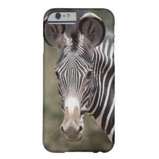 Zebra, Kenya, Africa Barely There iPhone 6 Case