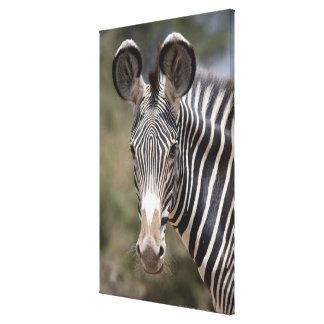 Zebra, Kenya, Africa Canvas Print