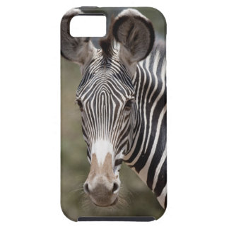 Zebra, Kenya, Africa iPhone 5 Covers