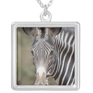 Zebra, Kenya, Africa Silver Plated Necklace