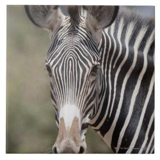 Zebra, Kenya, Africa Tile