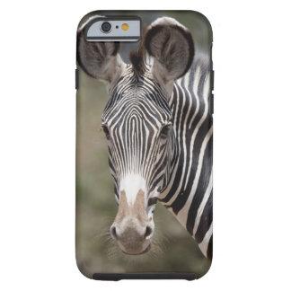 Zebra, Kenya, Africa Tough iPhone 6 Case