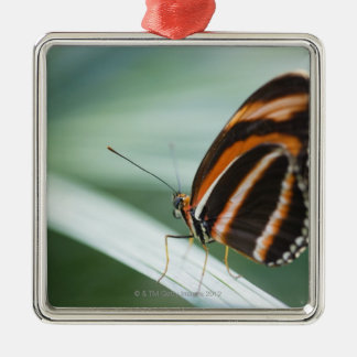Zebra Long Wing Butterfly Silver-Colored Square Decoration