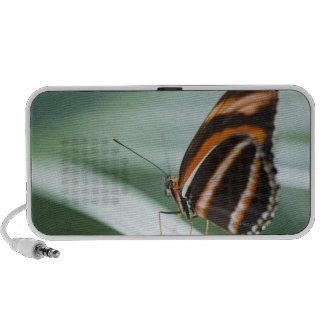 Zebra Long Wing Butterfly Mp3 Speakers