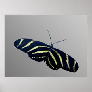 Zebra Longtail Posters