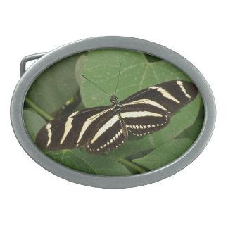 Zebra Longwing Butterfly Belt Buckle