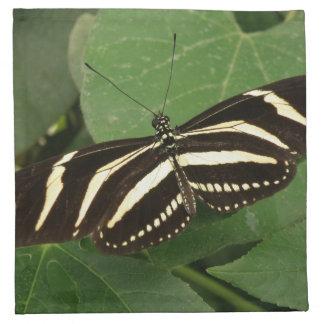 Zebra Longwing Butterfly Napkin
