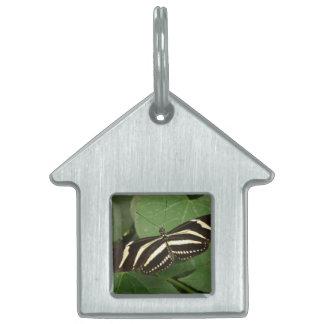 Zebra Longwing Butterfly Pet Tag
