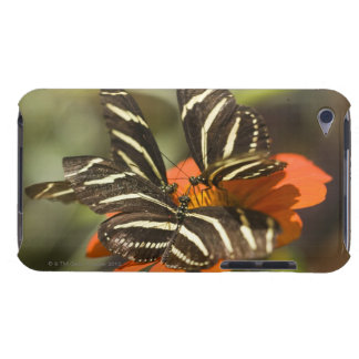 Zebra Longwing (heliconius charitonia) on flower iPod Touch Covers
