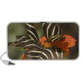 Zebra Longwing (heliconius charitonia) on flower iPhone Speakers