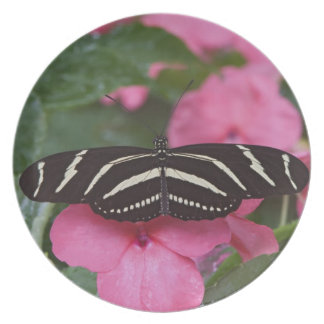 Zebra Longwing, Heliconius charitonius Plate