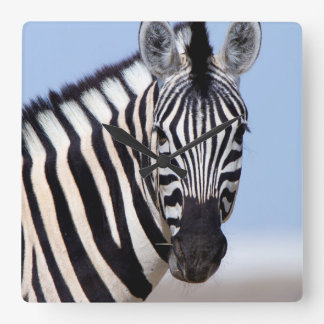 Zebra looking at you square wall clock