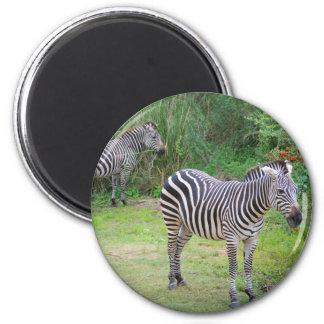 Zebra Mates Magnet
