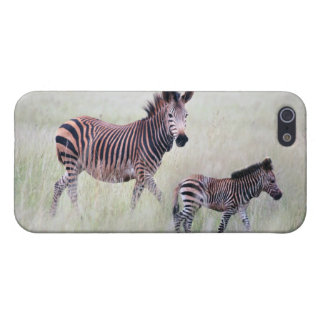 Zebra mom and baby cover for iPhone 5