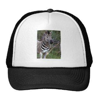 Zebra on white tie hat