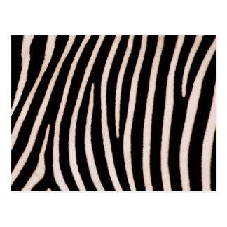 Zebra pattern stripes postcards