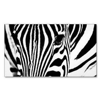 Zebra portrait black and white magnetic business cards