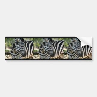 Zebra Pose Bumper Sticker