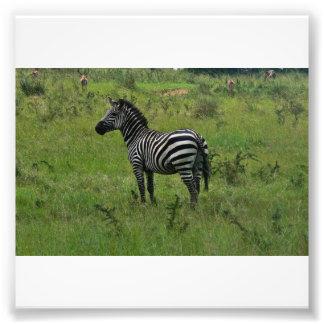 Zebra Print Photographic Print