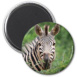 Zebra profile magnet