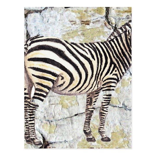 Zebra Rock Postcard