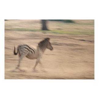 Zebra Running Away Wood Wall Art
