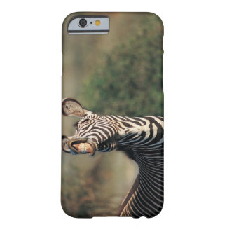 Zebra showing teeth (Equus burchelli) Barely There iPhone 6 Case