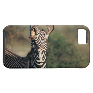 Zebra showing teeth (Equus burchelli) Tough iPhone 5 Case