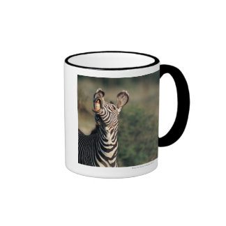 Zebra showing teeth (Equus burchelli) Mug