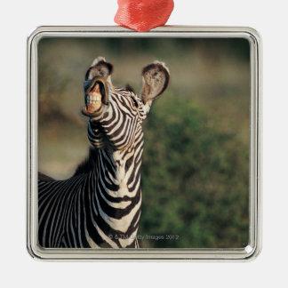 Zebra showing teeth (Equus burchelli) Silver-Colored Square Decoration