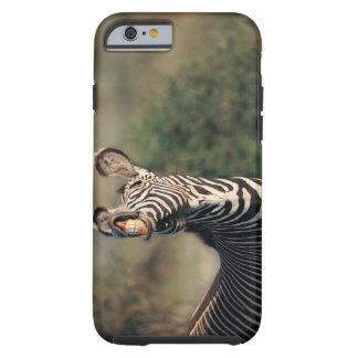 Zebra showing teeth (Equus burchelli) Tough iPhone 6 Case