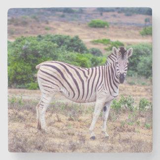 Zebra Stone Coaster