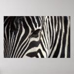 Zebra Stripe Pattern & Eye Print