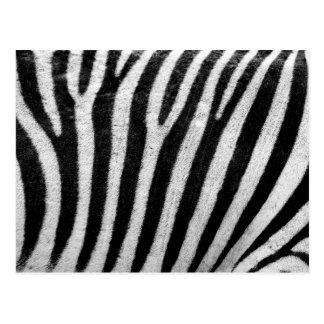 Zebra Stripes Photography Pattern Postcard