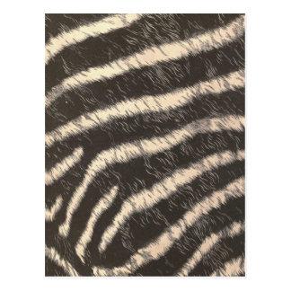 Zebra Stripes Post Card