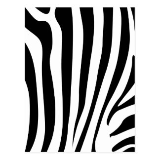 Zebra stripes postcards