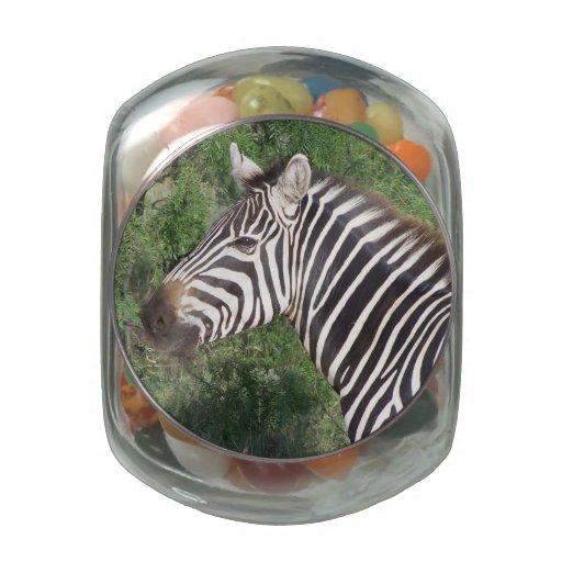 Zebra Jelly Belly Candy Jars