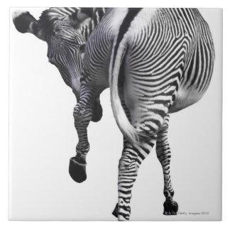zebra large square tile