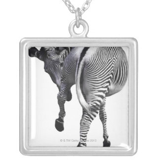 Zebra turning around silver plated necklace