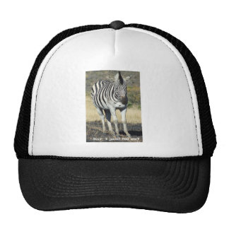 Zebra under the Weather Cap