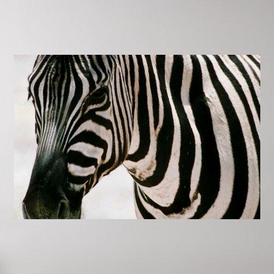 Zebra up close & striped poster