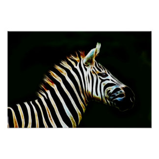 Zebra with black and white stripes in Africa Poster