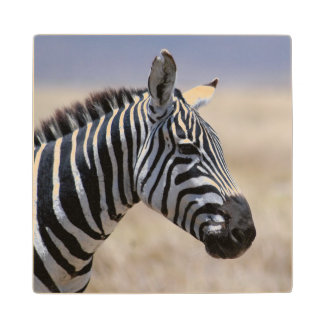 Zebra Wood Coaster